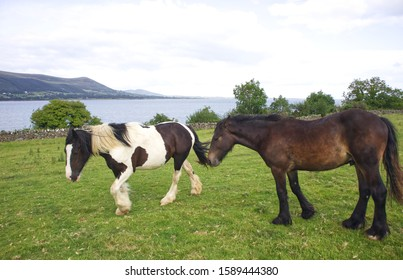 2 two horses by the sea