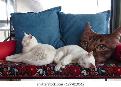 2 white cats on bench with pillows