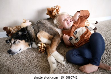 A 2 year old little girl child is making funny faces as she plays with her adopted pet German Shepherd Mix dog, with her collection of plush giraffe stuffed animals.