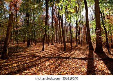 2005-11-08 Frelinghuysen Arboretum, Morristown NJ