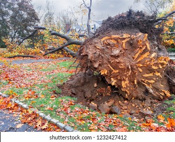 2012 Hurricane Sandy devastation with uprooted trees in Chatham, New Jersey