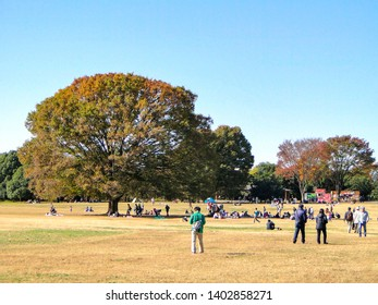 2014 November 15. Toyko Japan. People are resting on vacation days at Japanese wild Showa Memorial Park on autumn season day.