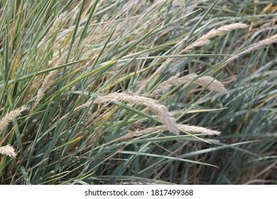 2017-02-23 wild sea grass falkland islands