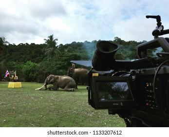 2018 April , Chonburi Thailand - Cinematography filming a documentary film of elephant with Blackmagic ursaminipro