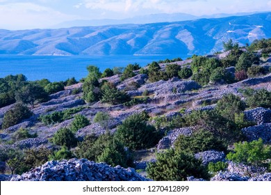 2018, CROATIA  - Hvar island: Hvari is world famous for its lavender, which is of the highest quality in the world. Due to its unique climate and year-round sunshine, the lavender grows in abundance.