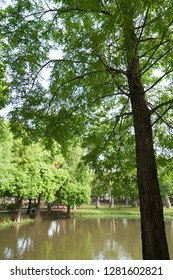 2018, TAIWAN, TAINAN, The Barclay Memorial Park, Beautiful scenery, there is a tree in the lake