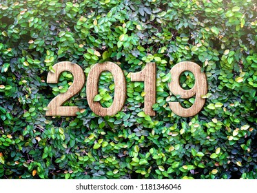 2019 happy new year wood texture number on Green leaves wall background,Nature eco concept,organic greeting card holiday.leave copy space for adding text