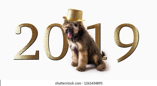 2019 New Years Dog Banner