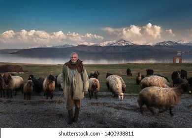 TATVAN-BİTLİS,TURKEY , 2019 The old shepherd takes his flock of sheep early in the morning to the plateau. Will not come back with sheep for 3 months