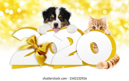 2020 happy new year number text, dog puppy and cat pet with golden christmas ribbon bow isolated on golden blurred lights background