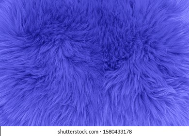 2020 trendy Phantom blue colour. Blue fluffy fur, fast fashion background. Fashionable color fur rug texture. Decorative dyed sheepskin. Phantom blue color toned abstract surface, copy space