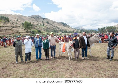 Huánuco,Perú;Setember 20,2015:XIV Regional Cheese Festival, Baños de Lauricocha. Party full of color and customs, where the contest of cheeses, livestock, dances, bullfights, extreme sports and a pies