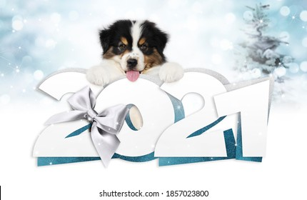 2021 glücklicher Neujahrstext mit lustigem Hund einzeln auf unscharfem Hintergrund für glückliche Grußkarte für das neue Jahr