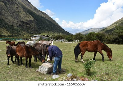 20-April-2018, Salkantay Mountain, Peru, South America. Mules on Salkantay Trek to Machu Picchu, Peru.
