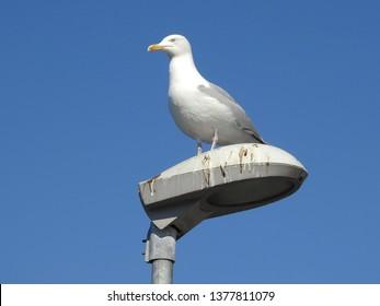 21st of April 2019 - Scene frojm Danish harbor with seagull sitting on a lamp post, Aalborg, Denmark