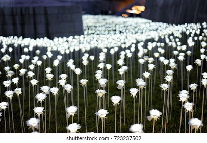 21st Century Lighting White Rose Farm which is shining every evening at Dongdaemun Design Plaza, Seoul,South Korea, 19 September 2017
