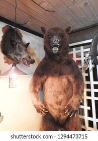 21st of July 2018 - Scene from Russian bar with close up of a taxidermic bear and Ust-Luga, Russia