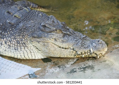 21th April 2012, Malaysia,Sabah, Sandakan Town there is an unknown crocodile Park, Which a lot of large and small crocodiles, let visitors appreciate & feeding, a place worth to visit