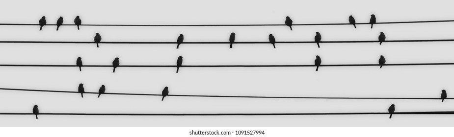 23 birds making music gathered on electric wires