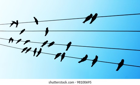 23 cockatoos on wire isolated over sky