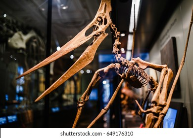 24 MARCH 2017, VIENNA, MUSEUM OF NATURAL HISTORY, AUSTRIA: Skeleton of a huge flying dinosaur pterodactyl with beak and wings at the exhibition in the museum