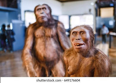 24 MARCH 2017, VIENNA, MUSEUM OF NATURAL HISTORY, AUSTRIA: Installation demonstrating the prehistoric ancestors of man homo erectus