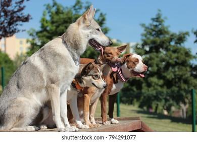 248/5000 Dog training