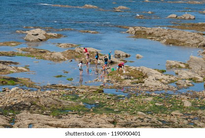 25 July 2018, Les Sables d Olonne France : People with nets seaside foraging in rocks in Les Sables d Olonne Vendee France