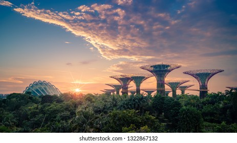 25/8/18 Supertrees at sunrise in Gardens by the bay, Singapore