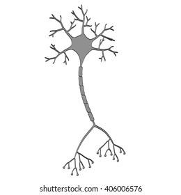2d cartoon illustration of brain neuron