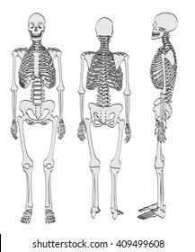 2d cartoon illustration of female skeleton