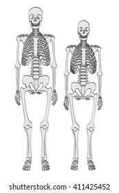 2d cartoon illustration of skeletons - male and female