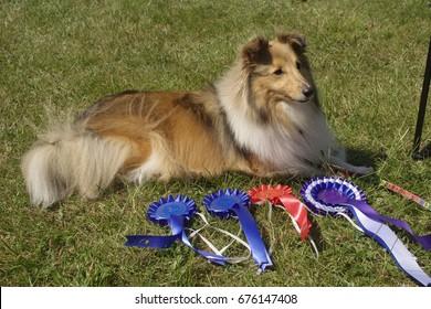 Dog Show Winner Images, Stock Photos & Vectors | Shutterstock