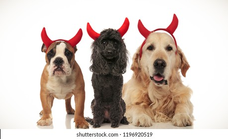 3 cute dogs wear devil horns for halloween, collage image