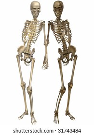 3 D Skeletons - Friends for ever