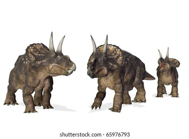 the 3 diceratops on the beach white background