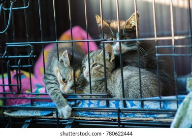 3 kittens are caged in an animal shelter