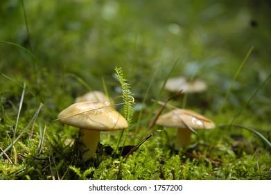 3 mushroom close up