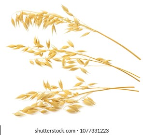 3 oat ears isolated on white background. With clipping path for package design