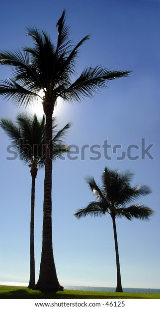 3 palm trees at the beach