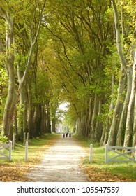 3 People walking down an avenue of London Plane Trees, leading from Chateau de Gizeux in the Loire France