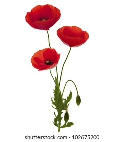 3 poppies bouquet over white background, entire plant with green foliage and red petals