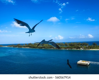 3 seagulls flying through the air in the bahamas