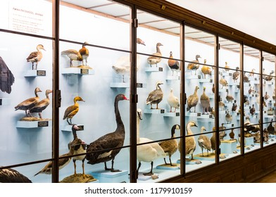 3 SEPTEMBER 2018, VIENNA, AUSTRIA: The Museum of Natural History composes stuffed animals, fish, mammalian birds and reptiles.