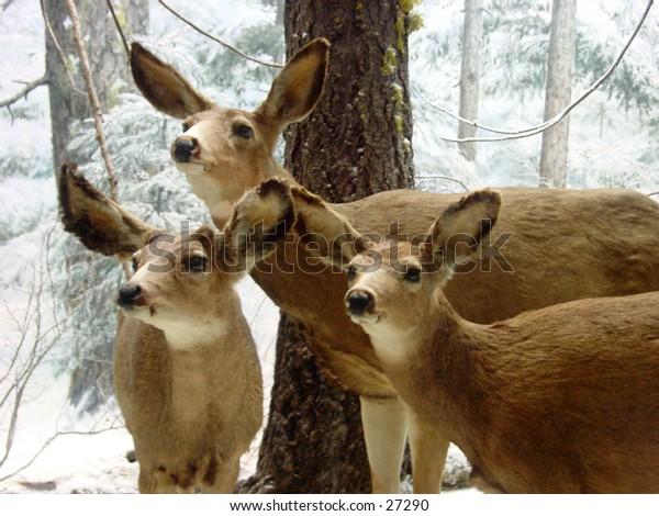 3 stuffed deers from the Steinhart aquarium in Golden Gate Park San Francisco California