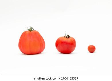 3 tomato species on white background