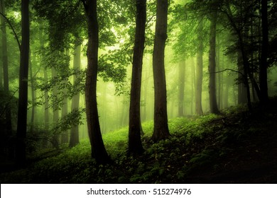 The 3 trees - Fog Impression