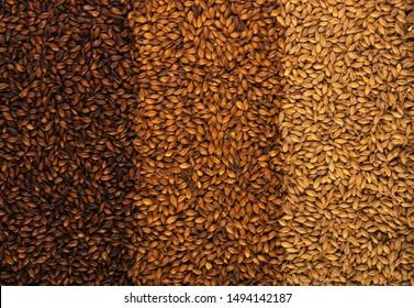 3 types of barley malt for beer. - Shutterstock ID 1494142187