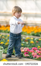 3 year old boy in a conservatory full of primroses