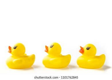 3 Yellow rubber ducks in a line on white background